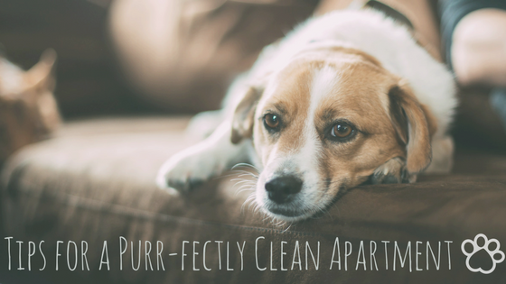 Tips for Keeping it Clean While Living with Pets